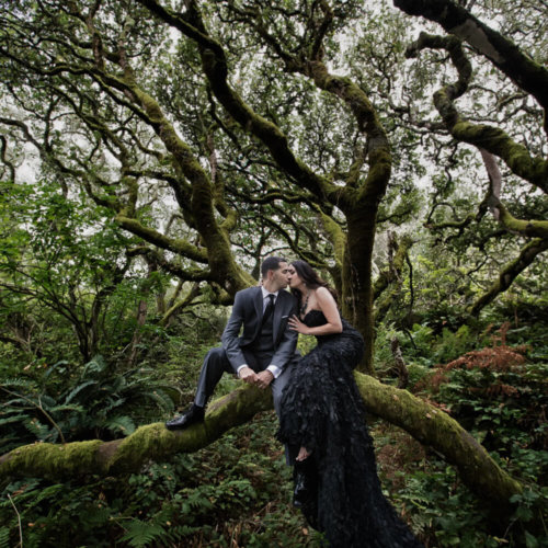 Bride & Groom sitting on a tree branch